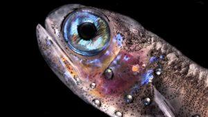 peces mesopélagicos csic